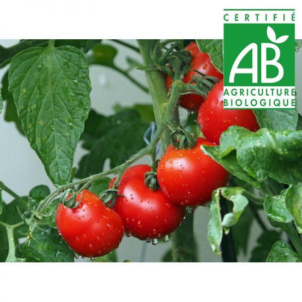 Tomates BIO (1kg)