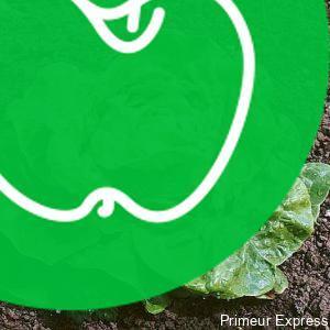 Salade Laitue BIO (la pièce)