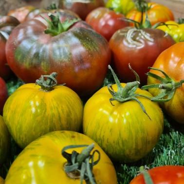 Mélange de Tomates Anciennes (1kg) 1