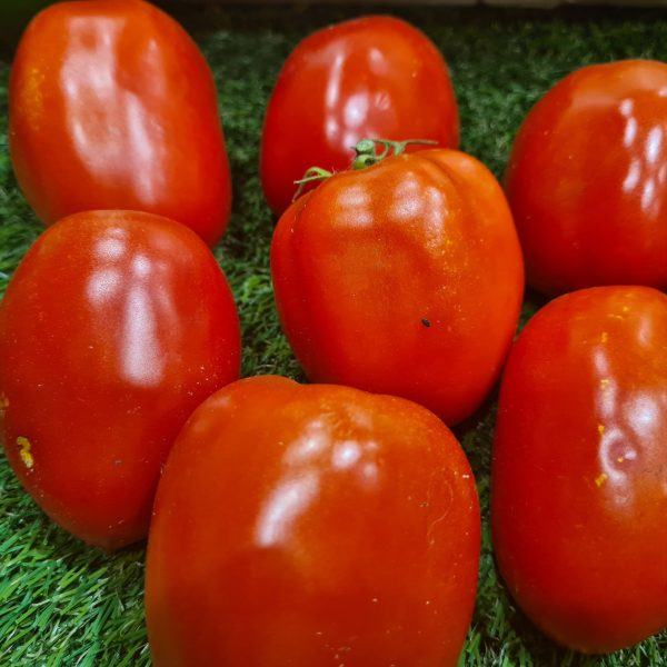 Tomate Olivine BIO (1kg) 1